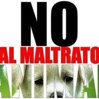 QUIEN MALTRATA A UN ANIMAL NO TIENE BUEN NATURAL: LAS DIEZ MUESTRAS MÁS ABERRANTES DE ELLO