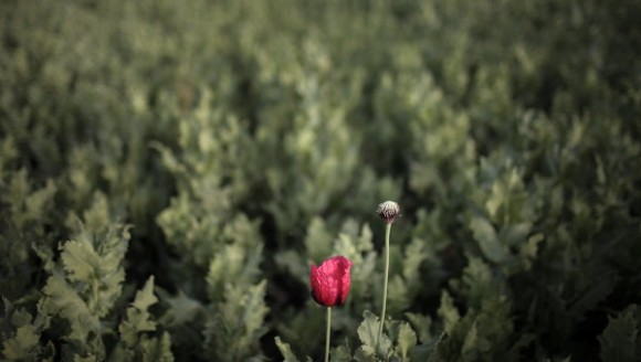 campos-de-opio-en-afganistan
