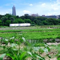 Europa criminaliza las semillas naturales, mientras que Cuba potencia la exitosa agricultura urbana en la Isla