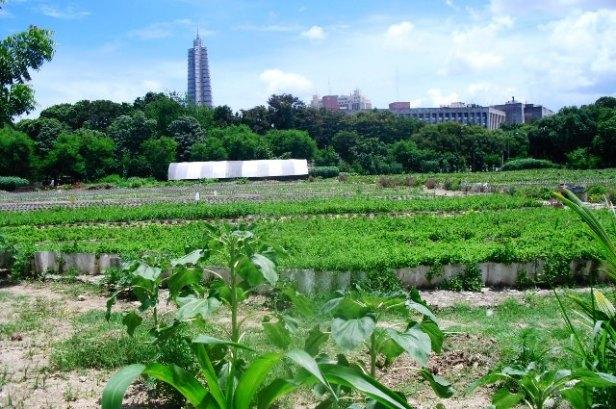 agricultura urbana-cuba
