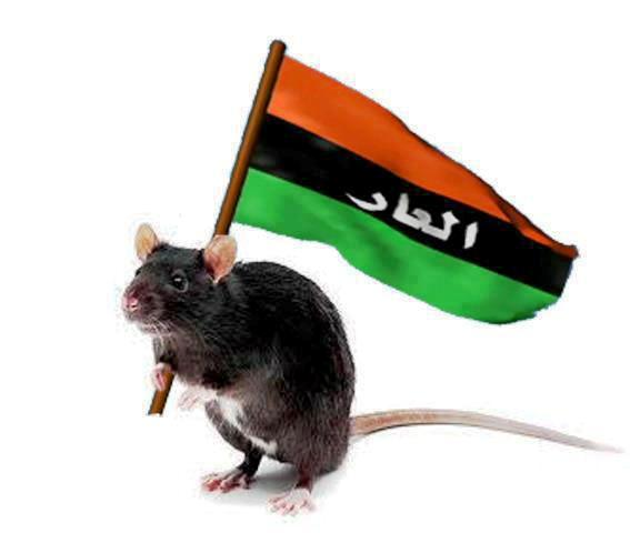 rata libia reaccionaria